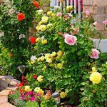 6 Best Fertilizer For Roses 2020 Buyer's Guide